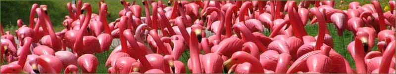 A Flocking